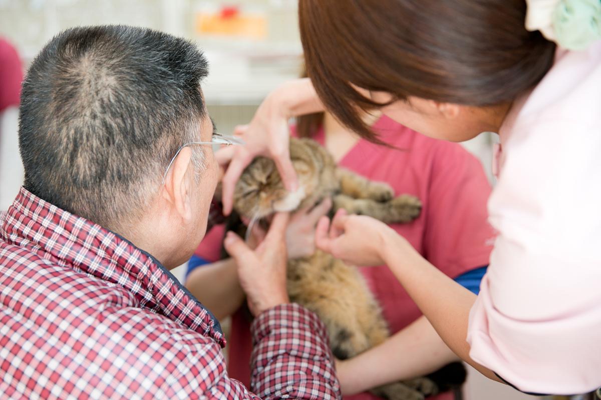 動物病院でペット医療について学ぶ専門学校生